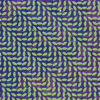 Merriweather post pavillon | Animal Collective. Interprète