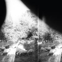 Asunder, sweet and other distress Godspeed You! Black Emperor, groupe voc. et instr.