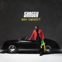 Wah gwaan ?! | Shaggy