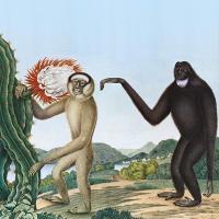Primates / Baston | Baston